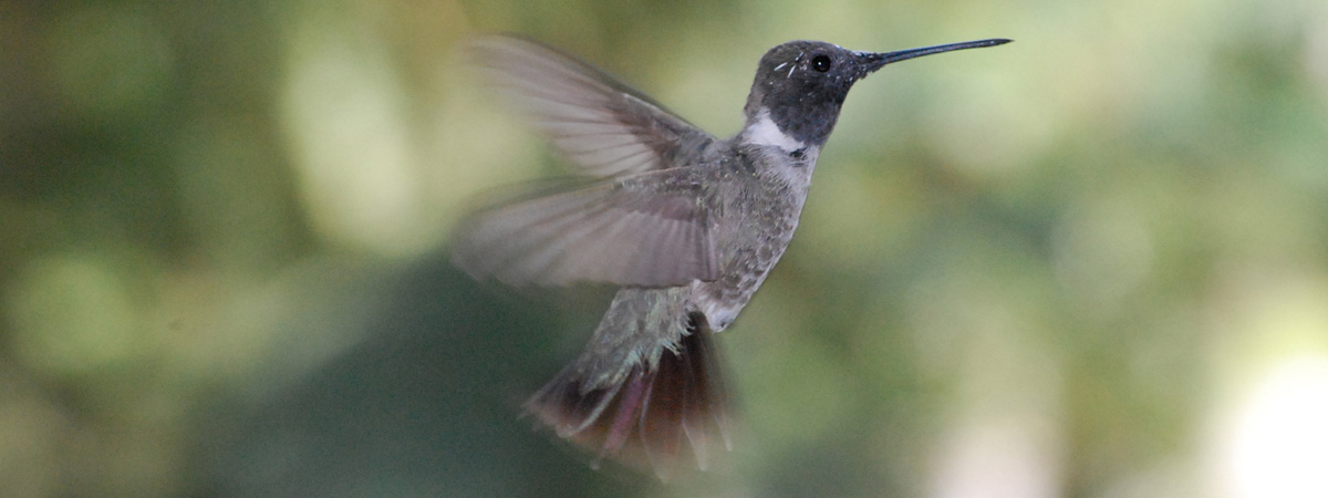 Google Hummingbird: What's All the Fuss About?